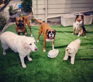 Affordable Dog Day Care Sydney Inner West