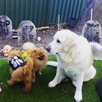 L&V Doggy Day Care Sydney