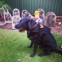 Fun at L&V Doggy Day Care Sydney