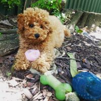 Puppy Day Care Sydney